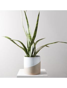 Faux Botanicals   Potted Snake Plant by West Elm