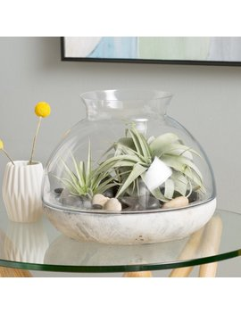 Syndicate Sales Glass Terrarium & Reviews by Syndicate Sales