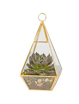 Deco Glass Terrarium, Succulent & Air Plant (Pyramid) by Deco