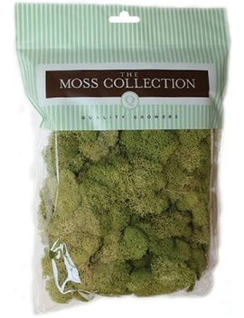 Quality Growers Qg2060 Preserved Reindeer Moss, 108.5 Cubic Inch, Spring Green by Quality Growers