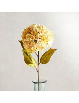 Ivory Velvet Hydrangea Stem by Grateful Harvest Collection