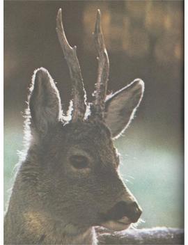 Vintage Reindeer Poster by Etsy