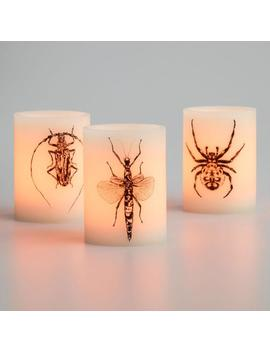 Creepy Critter Flameless Led Pillar Candles Set Of 3 by World Market