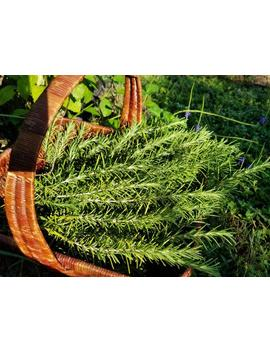 Rosemary  Leaves   Organic, Homegrown, Naturally Dried, Artisan by Etsy