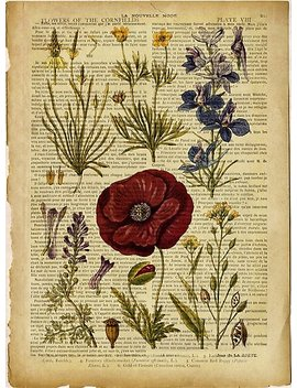 Botanical Print, On Old Book Page   Flowers by Art Dream Studio