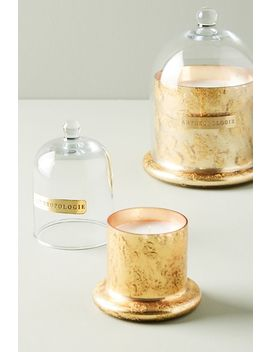 Siberian Fir Cloche + Candle by Anthropologie