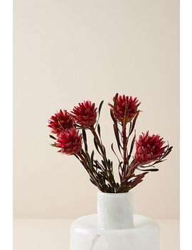 Dried Plumosum Bouquet by Anthropologie