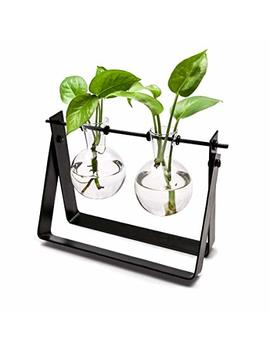Mkono Plant Terrarium Stand Modern Tabletop Glass Planter Flower Bulb Vase With Metal Swivel Holder by Mkono
