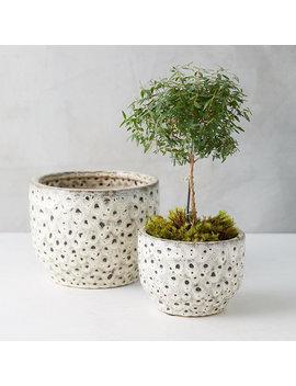 Spotted Earthenware Pot by Terrain
