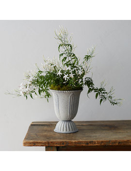 White Jasmine, Tall Urn Pot by Terrain
