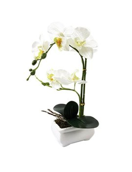 "Pepperlonely Brand 13"" H Artificial Ceramic Potted Plant Orchid, White by Pepperlonely"