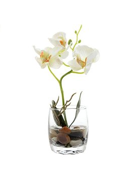 My Gift Mini Synthetic Silk Artificial Phalaenopsis Orchid In Glass Vase, White by My Gift