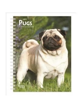 Pugs 2019 Calendar    (Paperback) by Target