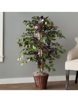 Charlton Home Oberham Capensia Tree In Basket & Reviews by Charlton Home
