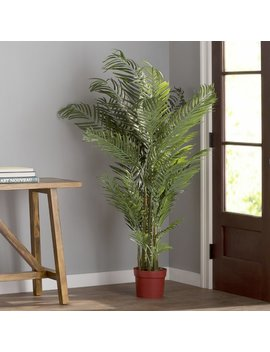 Beachcrest Home Areca Palm Tree Floor Plant In Pot & Reviews by Beachcrest Home