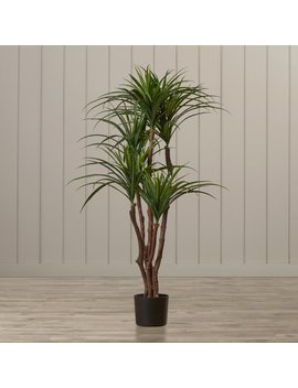 Beachcrest Home Tropical Yucca Tree In Pot & Reviews by Beachcrest Home