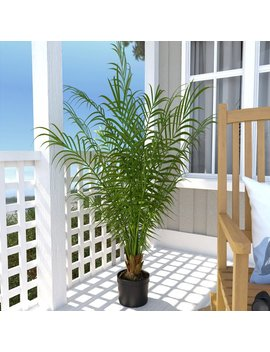 Beachcrest Home Areca Palm Tree In Pot & Reviews by Beachcrest Home