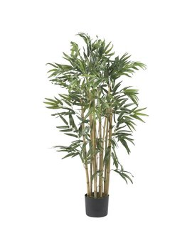 Mistana Multi Bambusa Bamboo Tree In Planter & Reviews by Mistana