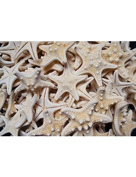 "White Knobby Starfish (5 Pcs.)   (1 2"")   Protoreaster Nodosus by Etsy"
