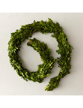 Preserved Boxwood Garland by Terrain
