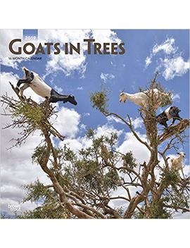 Goats In Trees 2019 12 X 12 Inch Monthly Square Wall Calendar, Domestic Funny Farm Animals (Multilingual Edition) by Amazon