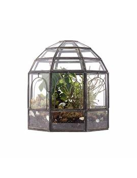 "Urban Born  Handmade Glass Terrarium, Birdcage  9""X9""X10"" by Urban Born"