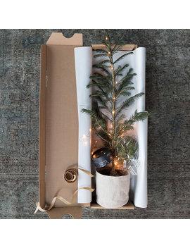 Little Living Tree by Terrain
