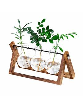 Kymake Clear Glass Planter Bulb Vase With Vintage Wooden Stand   High Borosilicate   Handmade   Best Choice Decorating Your Life. (3 Terrarium) by Kymake