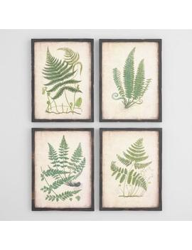 Fern Wall Art Set Of 4 by World Market
