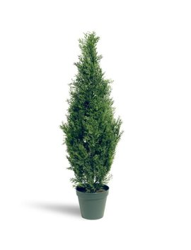 National Tree 36 Inch Arborvitae Tree In Dark Green Round Plastic Pot (Lmc4 700 36 1) by National Tree Company