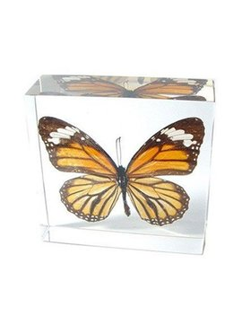 Nature Gift Store Real Monarch Butterfly Paperweight: Professionally Displayed And Mounted In Lucite Block by Nature Gift Store