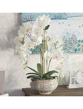 Pure Day Orchid Planter by Ebay Seller