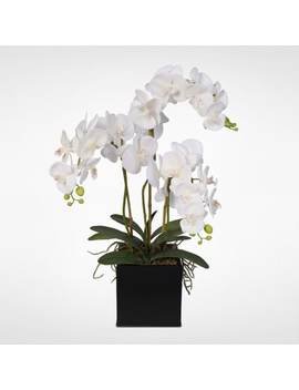 Real Touch Phalaenopsis Silk Orchids With Succulents In A Metal Pot by Generic