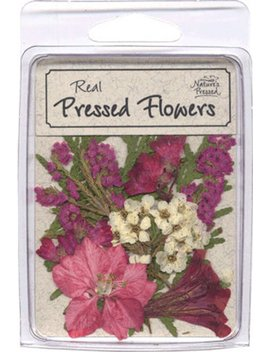 Pressed, Dried Pink And Mauve Flowers With Greenery   10 Pieces  Sale by Etsy