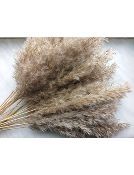 Home Decor, Bouquet Of Dry Reed Plume Grass, 50 Cm Long 25 Small Sized Fluffy Spikelets, Natural Color Dried Pampas Grass, Woodland Decor by Etsy