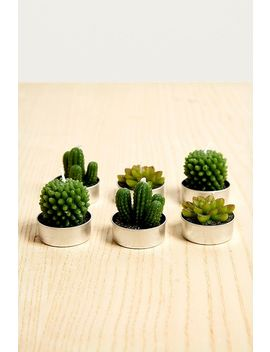 Bougies Chauffe Plat Plantes Grasses Et Cactus by Urban Outfitters