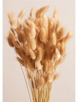 "Dried Bunny Tail Grass In Natural Color   4oz Bunch   27"" Tall by Afloral"