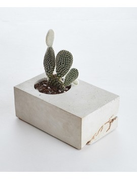 Vale Concrete Block Planter With Cactus, Gray And Gold by Lulu & Georgia
