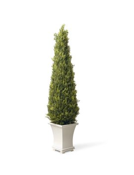 Darby Home Co Upright Juniper Square Tapered Topiary In Pot & Reviews by Darby Home Co