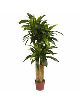 Nearly Natural 6648 Corn Stalk Dracaena Decorative Silk Plant, 4 Feet, Green by Nearly Natural
