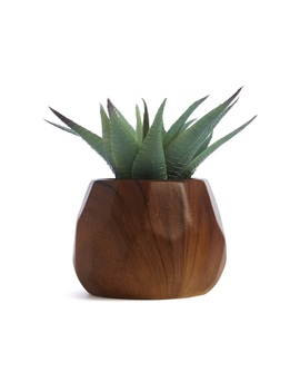 Wood Faux Plant by Primark