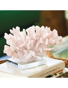 Coral On Acrylic Base by Ballard Designs
