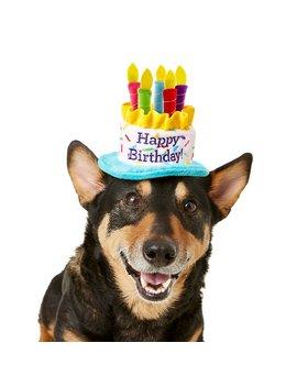 frisco-birthday-cake-dog-&-cat-hat by frisco