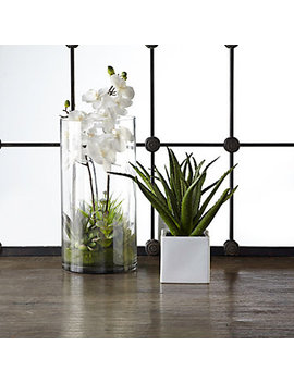 Faux Orchid With Succulents In Vase by Z Gallerie