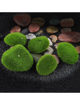 Marimo Stone Moss Miniature Dollhouse Garden Craft Fairy Bonsai Plant Decor Vv by Ebay Seller