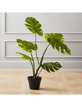 Faux Potted Monstera Plant by Crate&Barrel