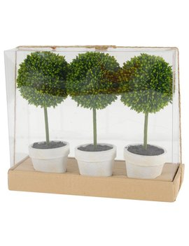 Charlton Home Floor Boxwood Topiary In Pot & Reviews by Charlton Home