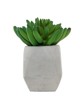 "5.2"" X 3.9"" Artificial Sedum Arrangement In Cement Pot Green/Gray   Lloyd & Hannah by Lloyd & Hannah"