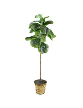 4 Ft. Fig W/Basket by At Home