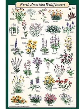 Picture Peddler North American Wildflowers Educational Science Reference Chart Print Poster 24x36 by Picture Peddler